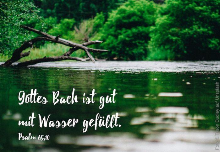 Bach mit grünem Ufer