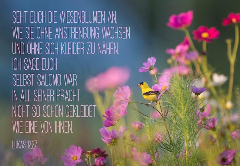 rosa Blumen und gelber Vogel