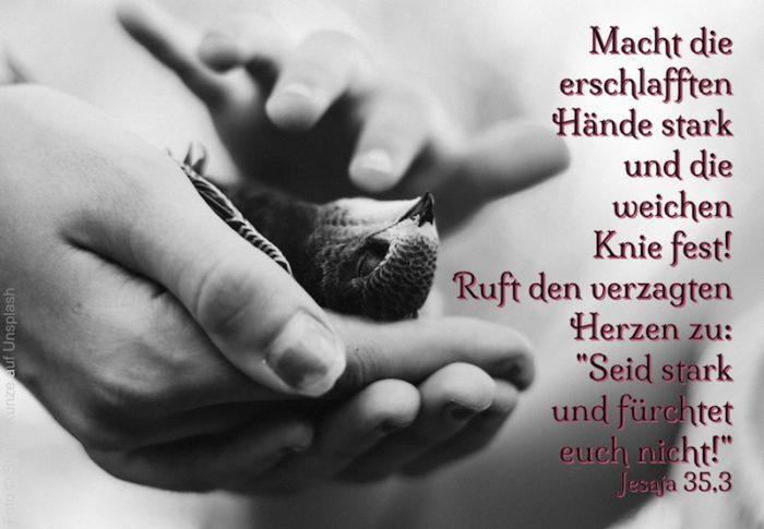 Hände, die vorsichtig einen kleinen Vogel halten