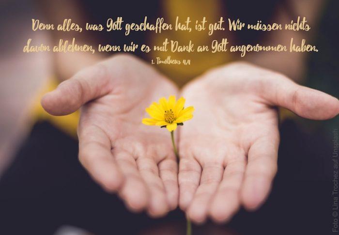 offene Handflächen mit einer gelben Blume