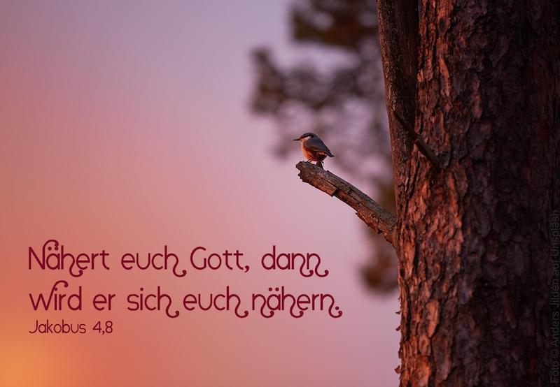 Vogel auf Ast im Abendrot