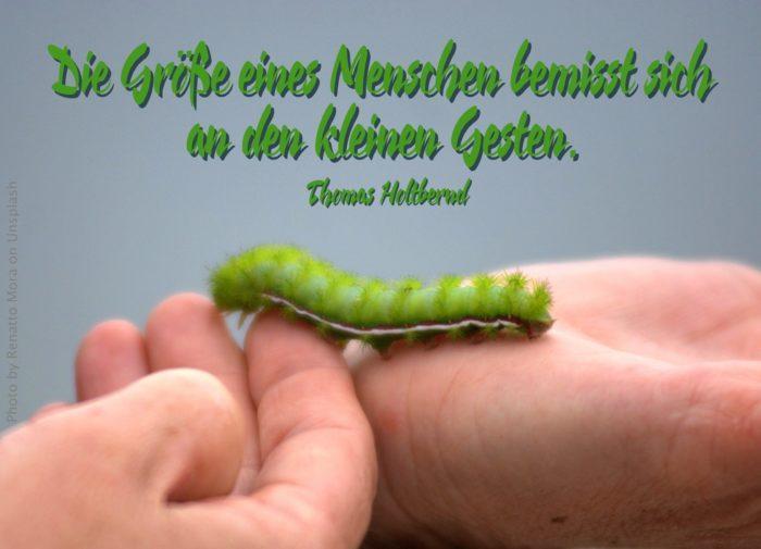 grüne Raupe auf der Hand