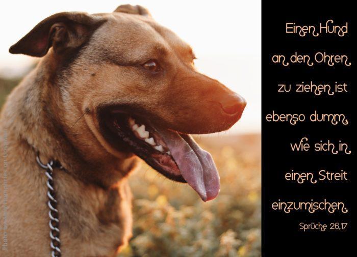 Hund mit heraushängender Zunge