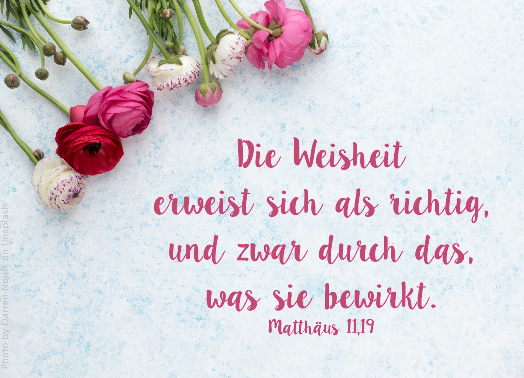 """alt=""""rote_weisse_und_rosa_rosen_erwartet_bibelhoerbuch_jesus_spricht_dankgebet"""""""