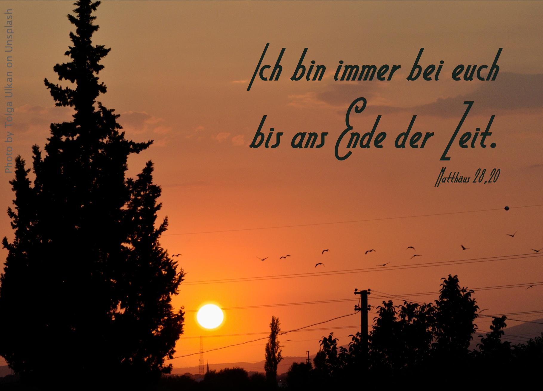 """alt=""""abendrot_mit_baum_und_voegeln_erwartet_bibelhoerbuch_auferstehung"""""""