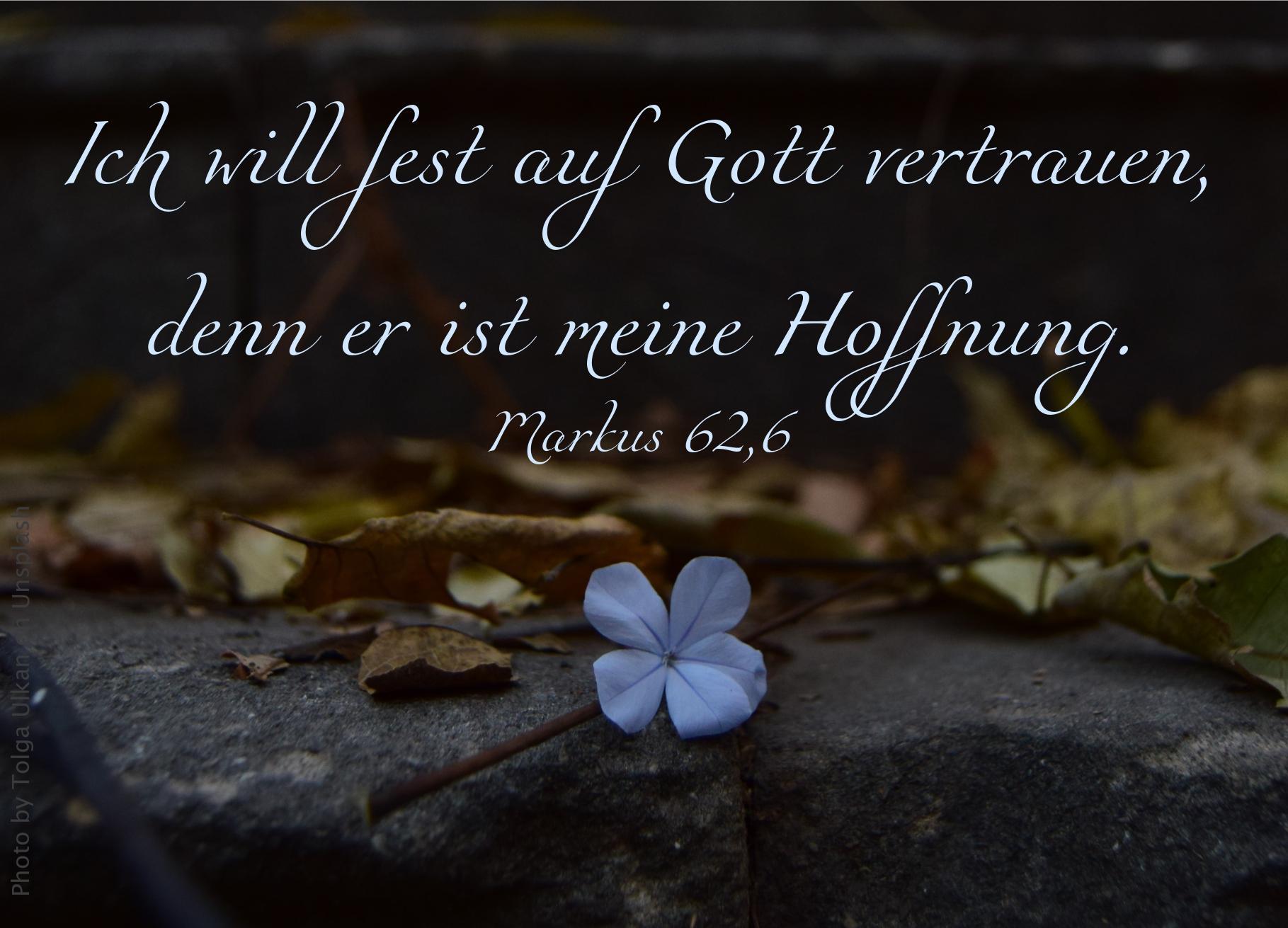 """alt=""""bluete_auf_beton_erwartet_bibelhoerbuch_jesu_taufe"""""""