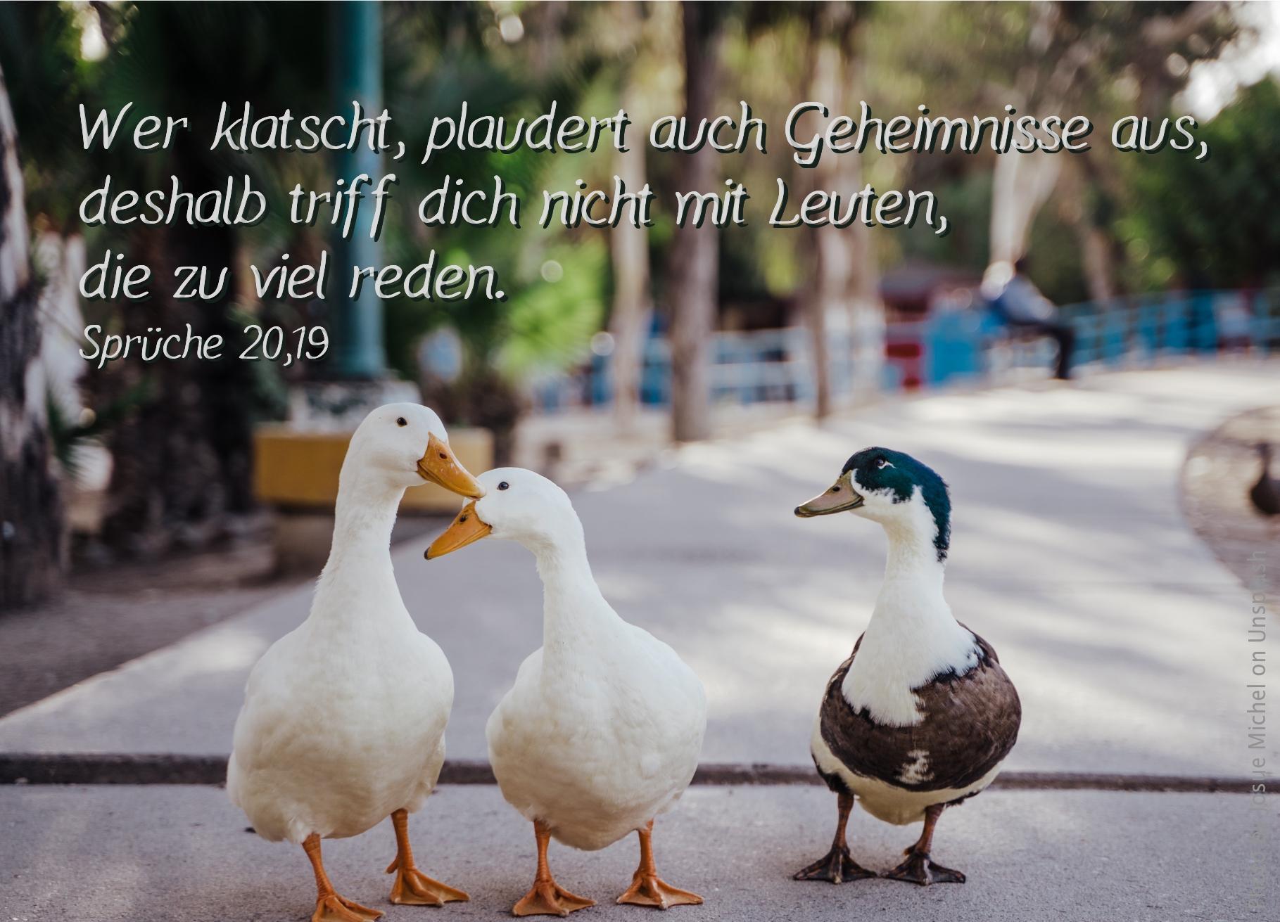 """alt=""""drei_gaense_erwartet_bibelhoerbuch_rechtsstreit_unter_christen"""""""