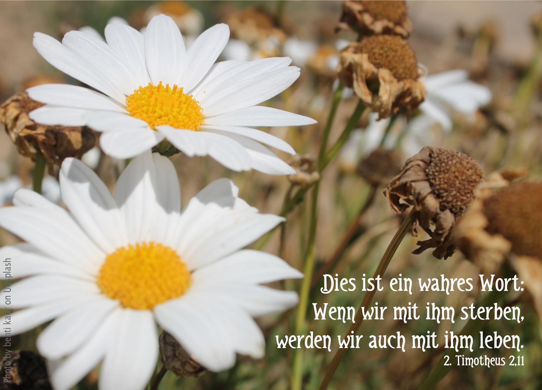 """alt=""""vertrocknete_und_frische_blumen_erwartet_bibelhoerbuch_ein_bewaehrter_arbeiter"""""""