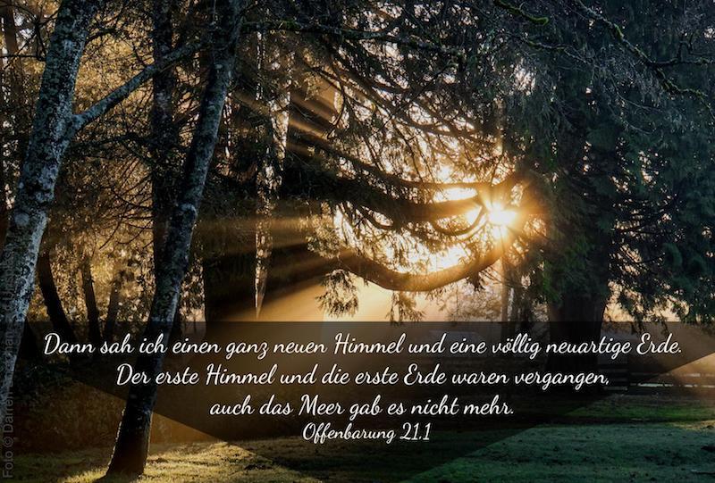 Sonne strahlt durch Tannenwald