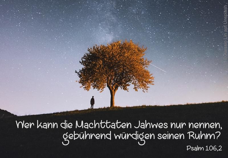Baum vor Sternenhimmel