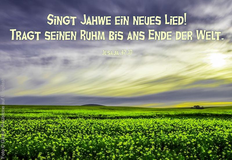 grünes Feld vor blau-gelbem sonnigem Himmel