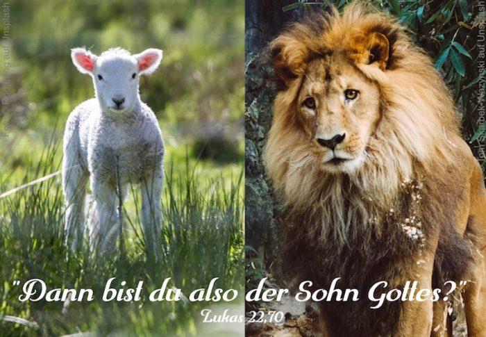 Lamm und Löwe