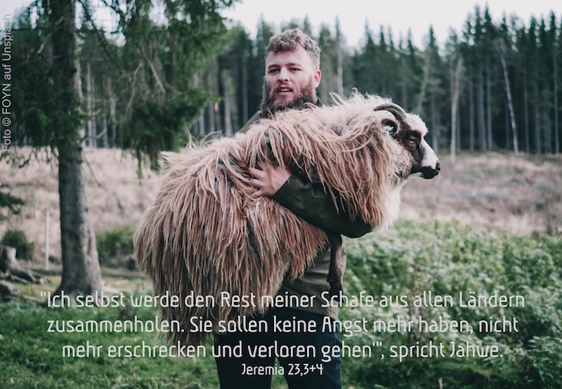 Schäfer trägt einen Schafbock am Waldrand