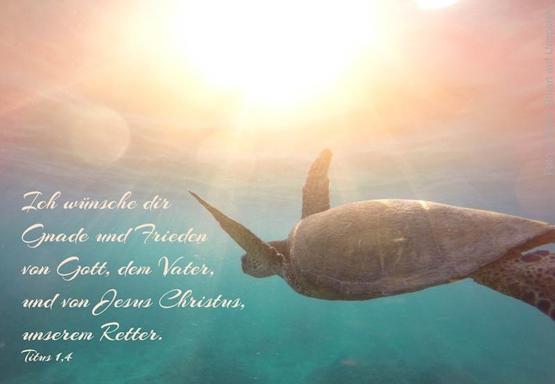 Wasserschildkröte schwimmt ins Licht
