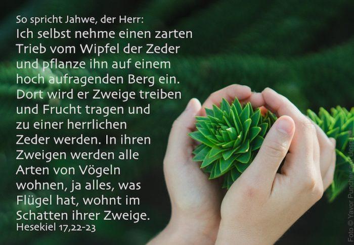grüner Trieb