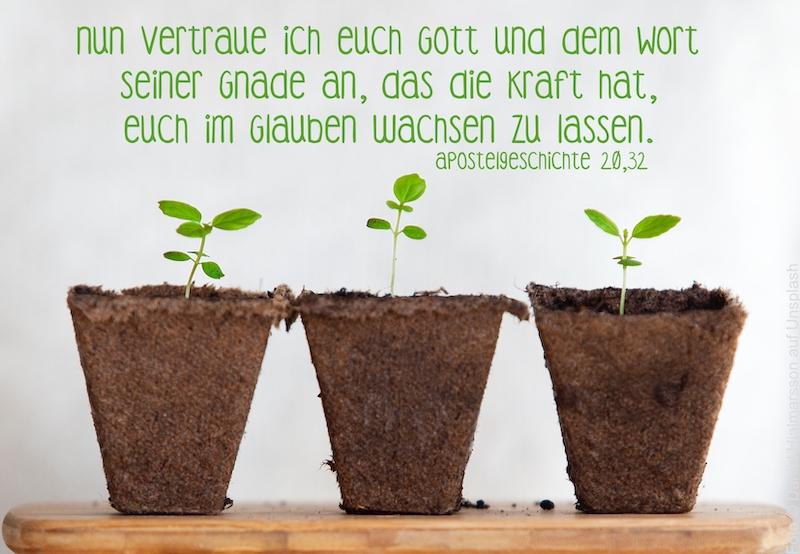 3 Pflanzenkeimlinge