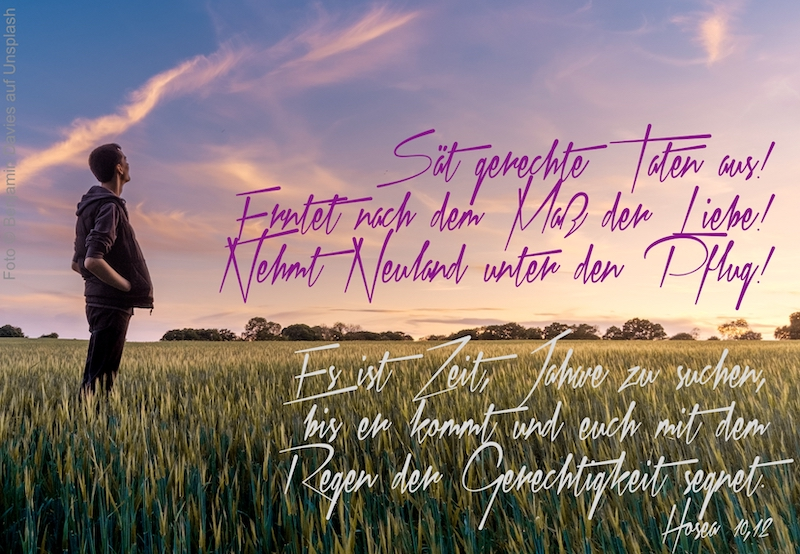 Mann schaut über ein Getreidefeld zum Himmel auf