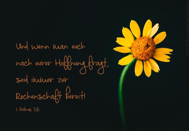 leuchtende Sonnenblume auf schwarzem Hintergrund