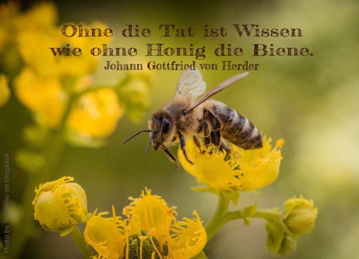 Biene auf gelber Blüte