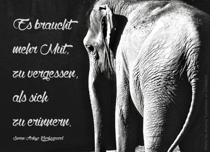 Elefant s/w