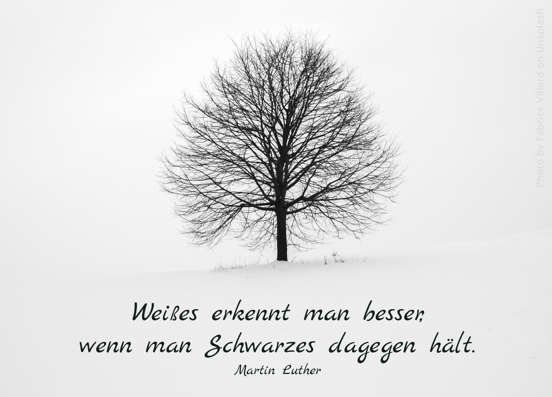 Baum im Winterschnee
