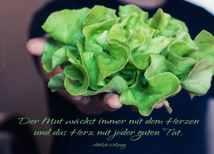 jemand reicht einen grünen Salatkopf