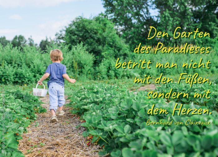 kleines Kind in einem Erdbeerfeld