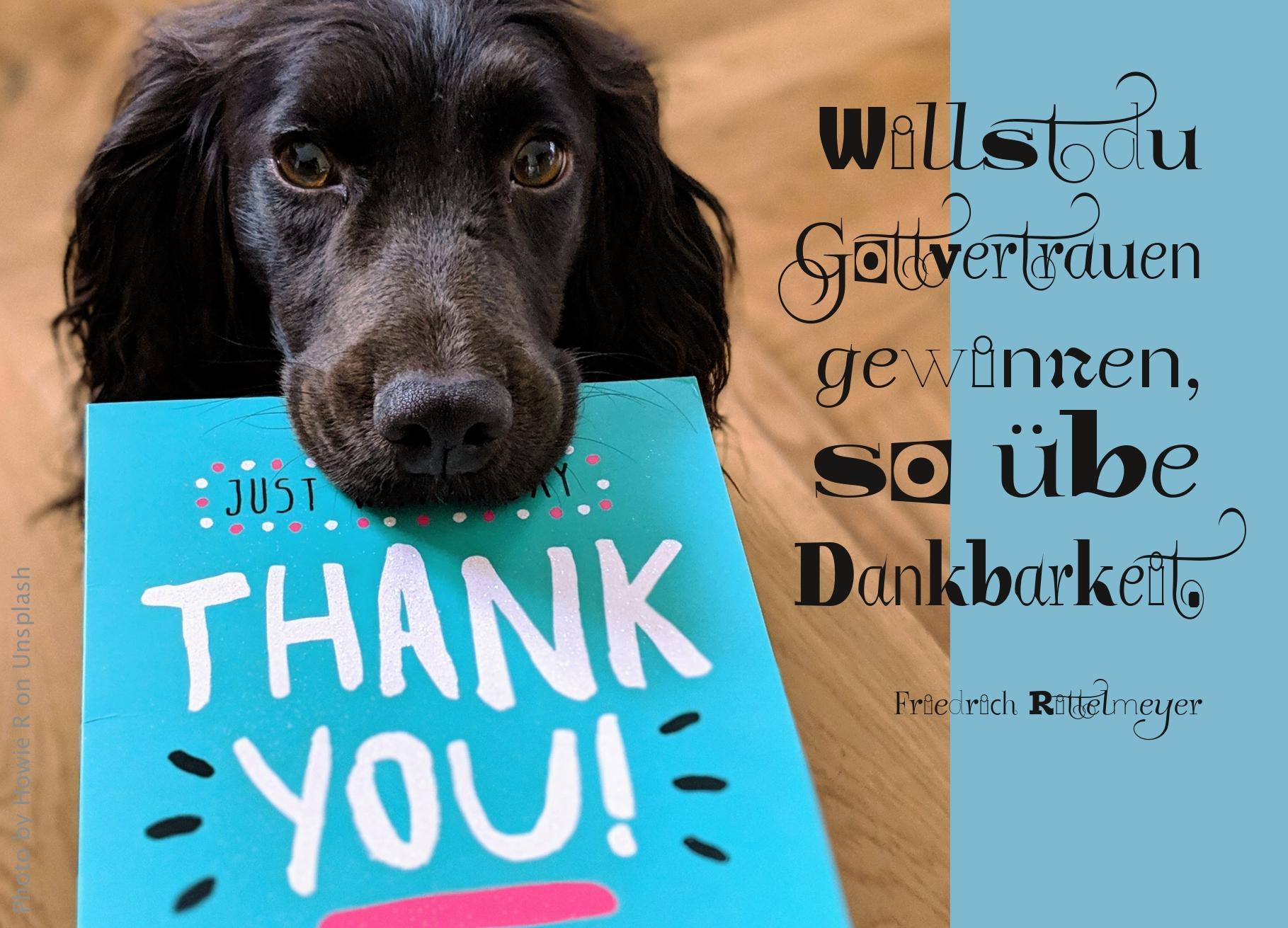 """Hund mit Karte im Maul, auf der """"Thank you"""" steht"""