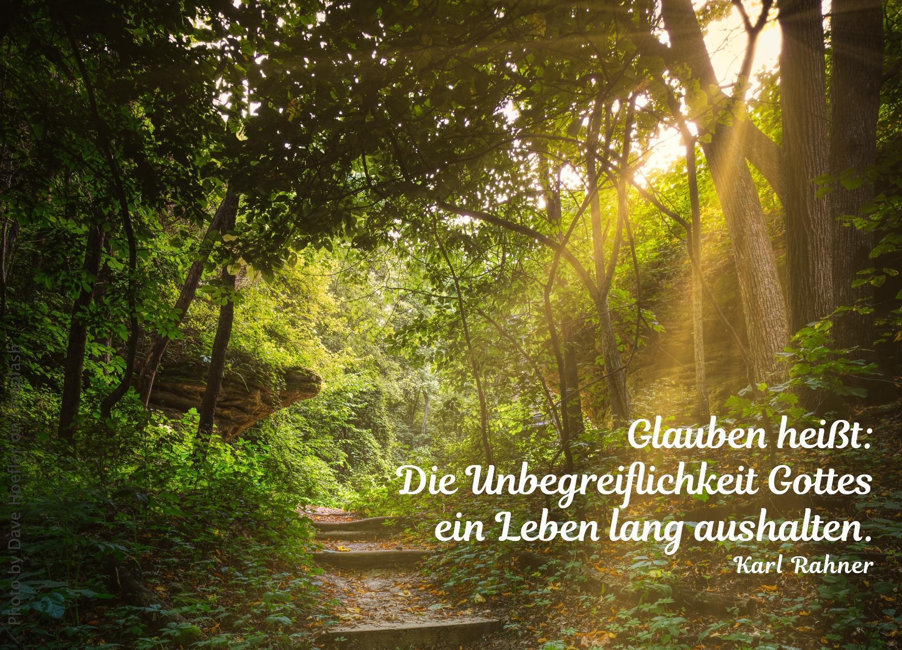 Weg durch grünen Wald mit Sonnenstrahlen