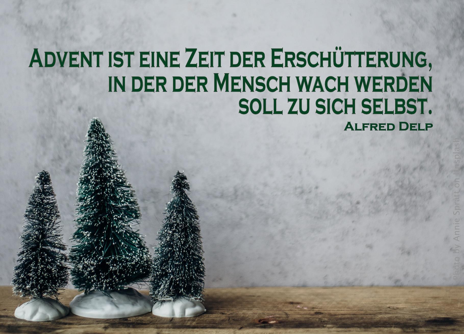 "alt=""drei_tannenbaeumchen_vor_betonwand_erwartet_bibelhoerbuch_hosea"""