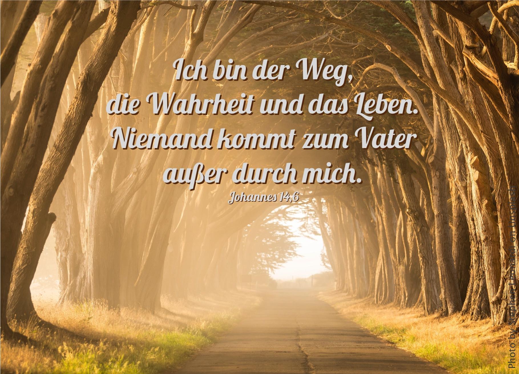 """alt=""""weg_durch_baumallee_erwartet_bibelhoerbuch_der_weg_zum_vater"""""""