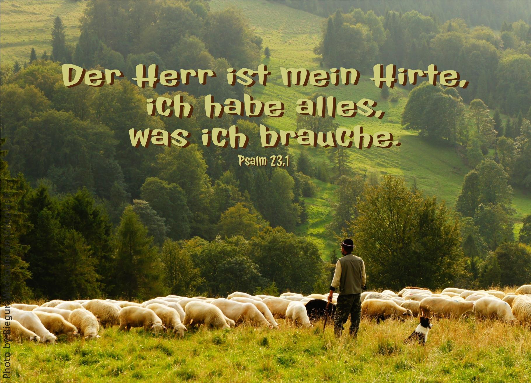 """alt=""""schafherde_mit_Hirte_vor_Bergwiese_erwartet_bibelhoerbuch_prophezeiungen_das_Wirken_des_Heiligen_Geistes"""""""