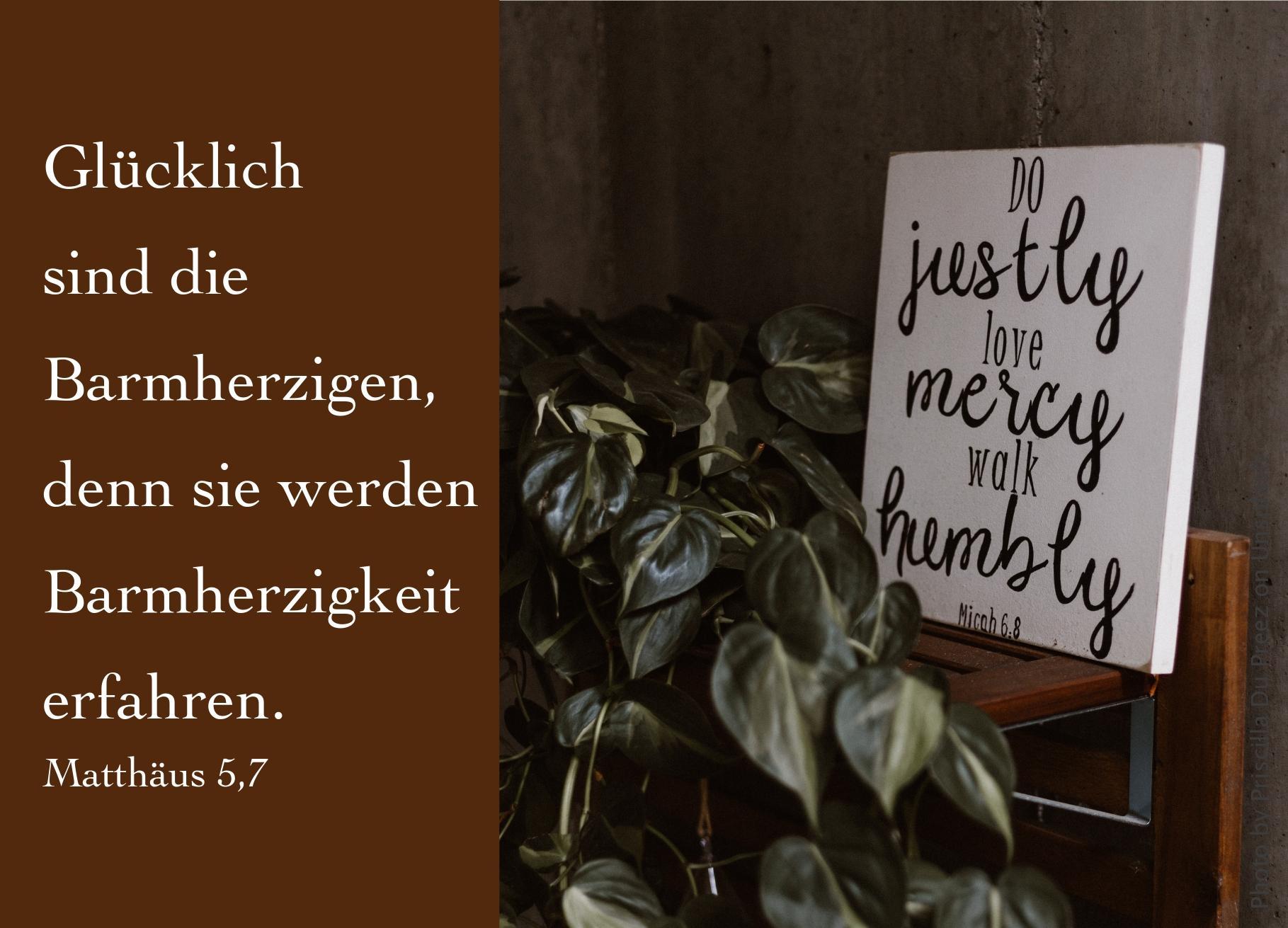 """alt=""""Zimmerpflanze_neben_weissem_schild_mit_bibelvers_erwartet_bibelhoerbuch_die_bergpredigt"""""""