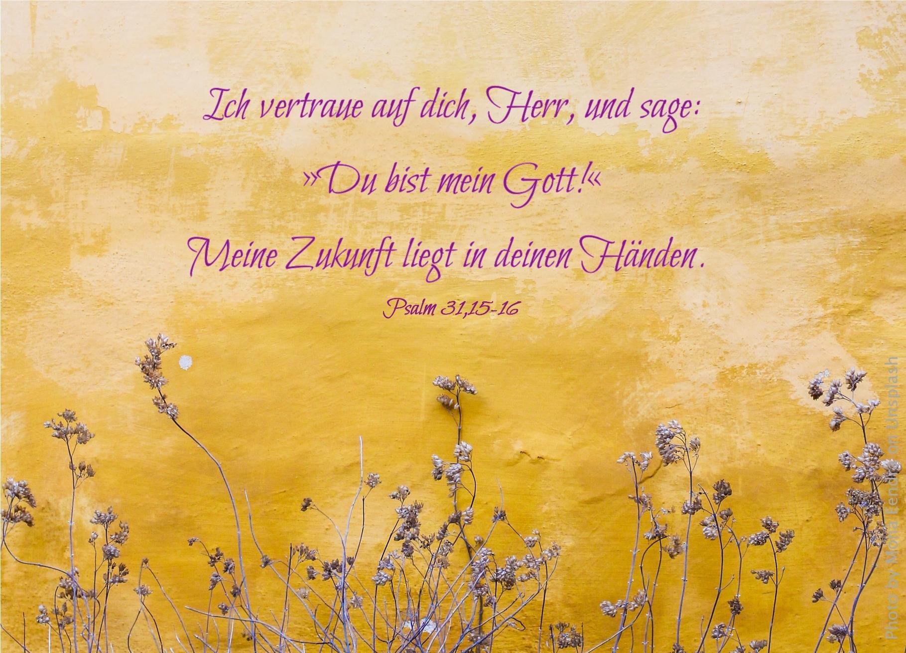 "alt=""blumen_vor_gelber_wand_erwartet_bibelhoerbuch_beten_fasten_besitz"""