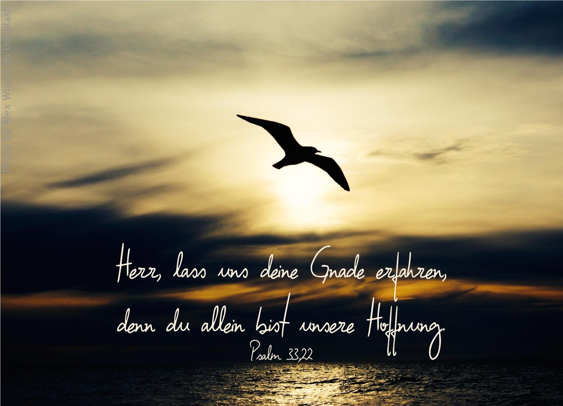 """alt=""""moewe_ueberm_meer_bei_sonnenaufgang_erwartet_bibelhoerbuch_anweisungen_fuer_den_sabbat"""""""