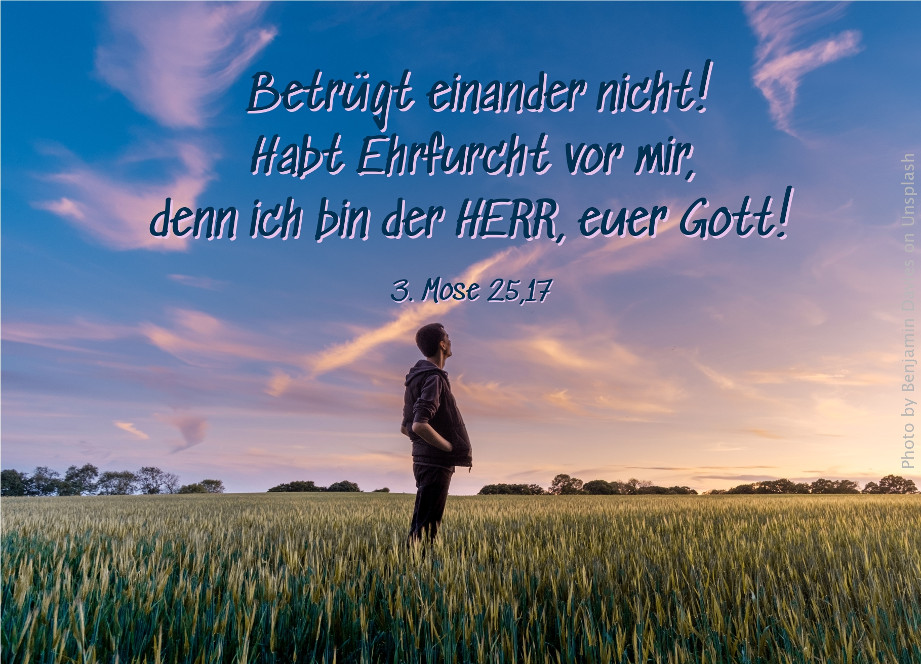 """alt=""""mann_steht_in_feld_mit_blick_zum_himmel_erwartet_bibelhoerbuch_sabbat-und_erlassjahr"""""""