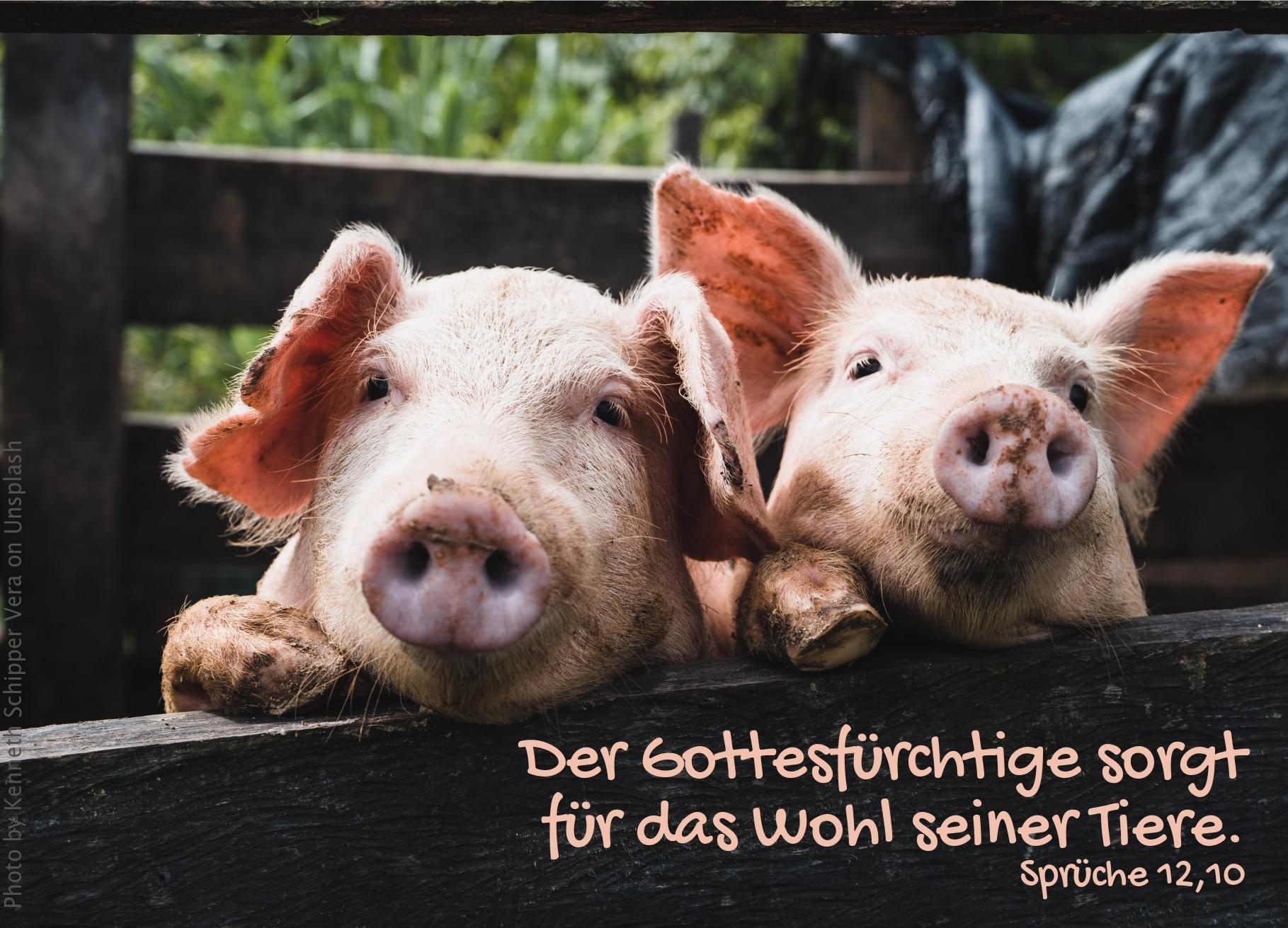 """alt=""""zwei_ferkel_gucken_ueber_den_zaun_erwartet_bibelhoerbuch_der_groesste_im_reich_gottes"""""""