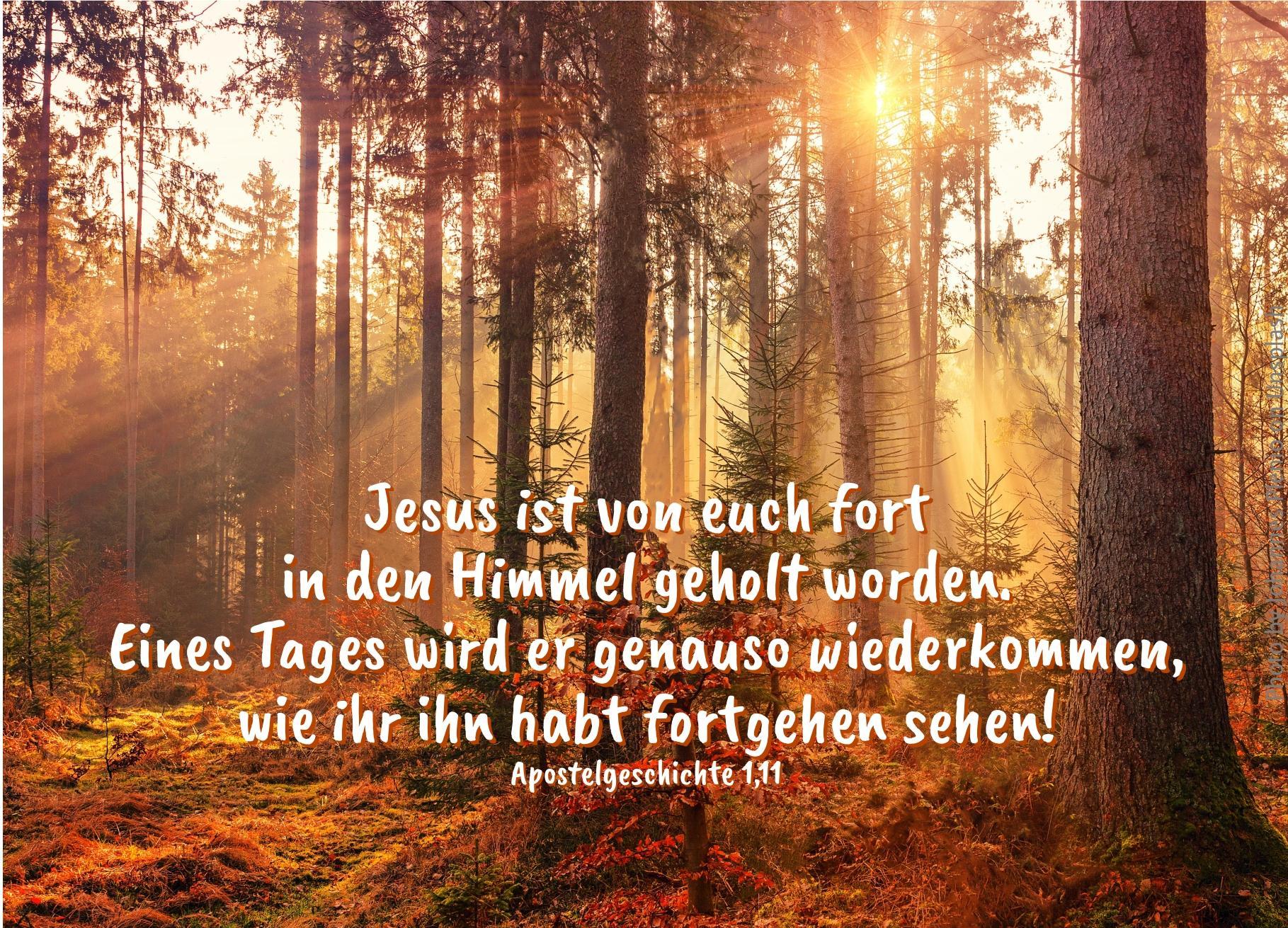 """alt=""""sonnenstrahl_durch_nadelwald_erwartet_bibelhoerbuch_david_und_nathan"""""""