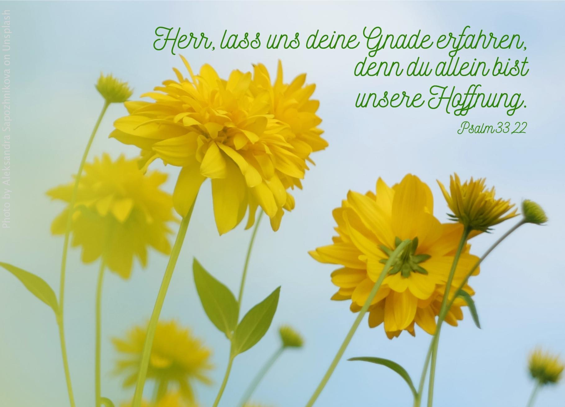 """alt=""""gelbe_blumen_vor_blauem_himmel_erwartet_das_laubhuettenfest"""""""