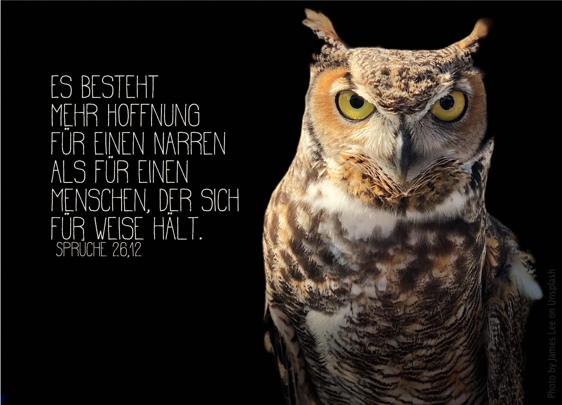 """alt=""""eule_vor_schwarzem_hintergrund_erwartet_bibelhoerbuch_jesus_groesser_als_mose"""""""
