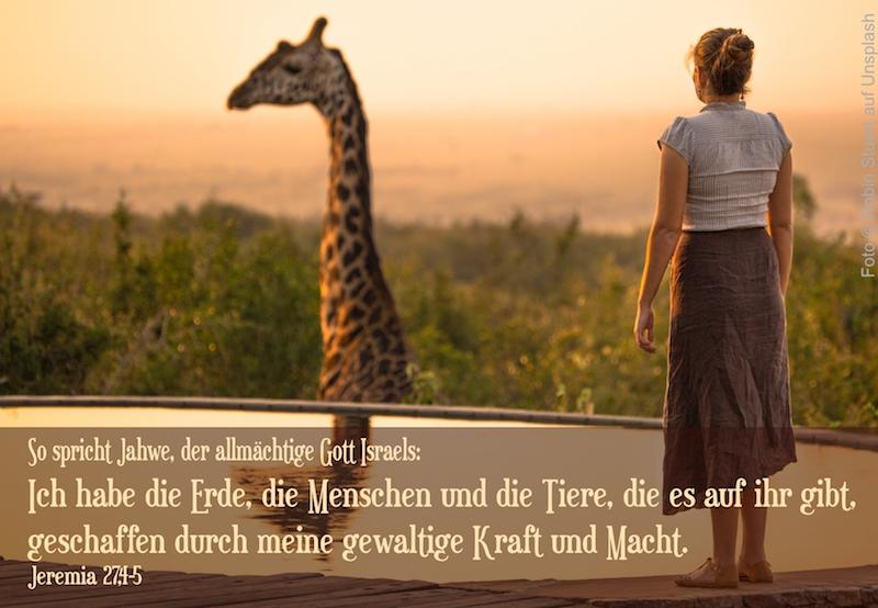 Frau und Giraffe